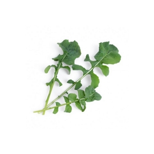 LINGOTTO GREENS -RUCOLA BIOLOGICA